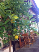 Aldayaa restaurant Libanais