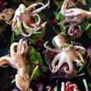 , Entrée : Terre et Mer  - Poulpes en marinade -