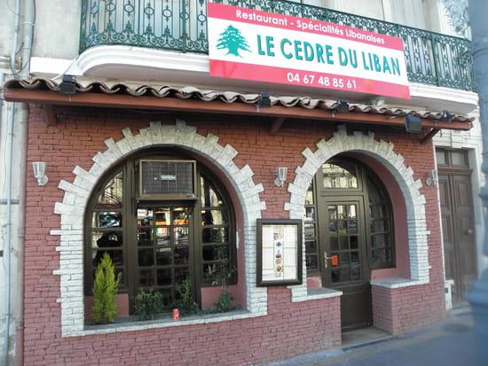 Le Cèdre du Liban