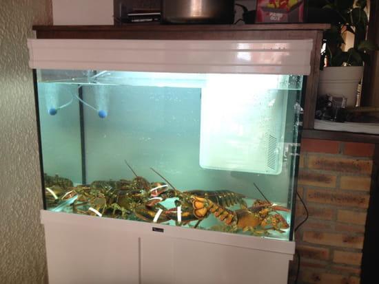, Restaurant : Le Patio  - Le vivier du Patio homard et langouste -