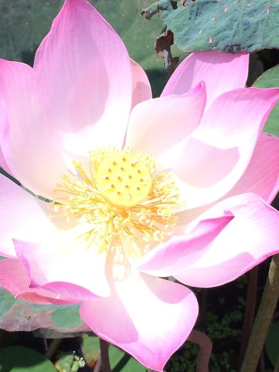 Restaurant Kyoto  - fleur -